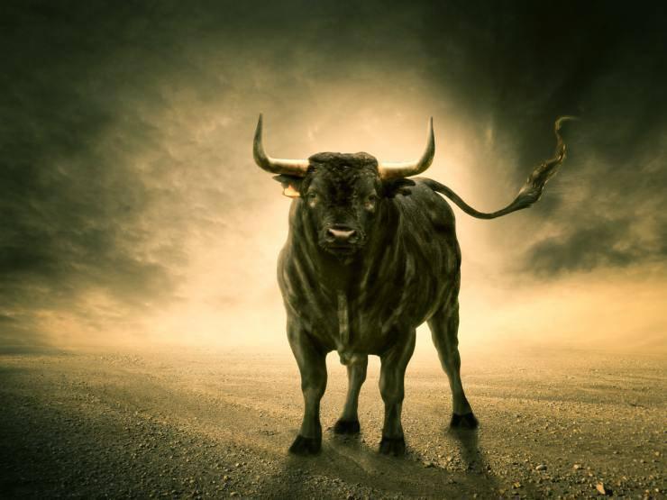 Differenze tra bue e toro