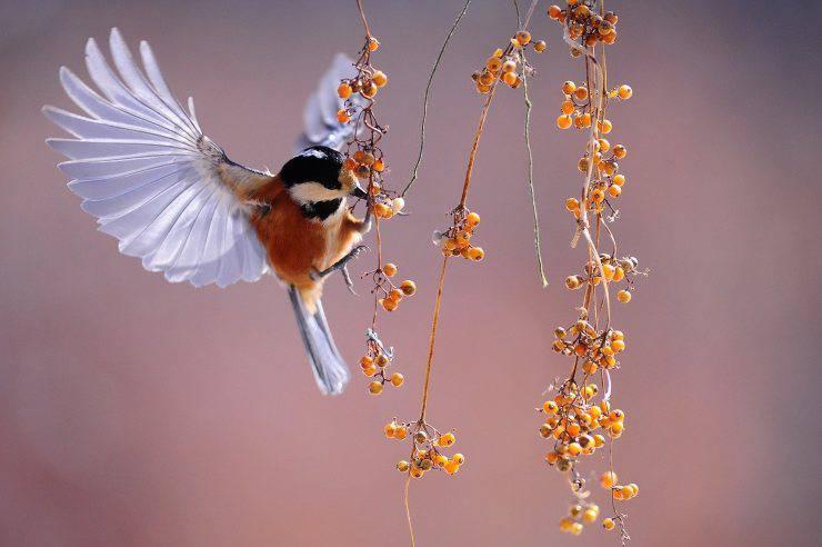 uccelli inquinamento
