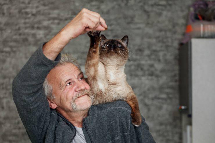 Diventare il miglior amico del gatto
