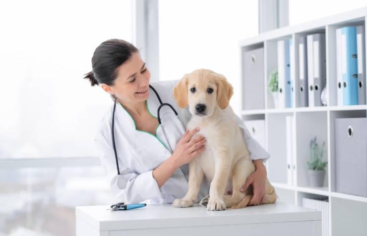 Si può dare la tachipirina al cane?