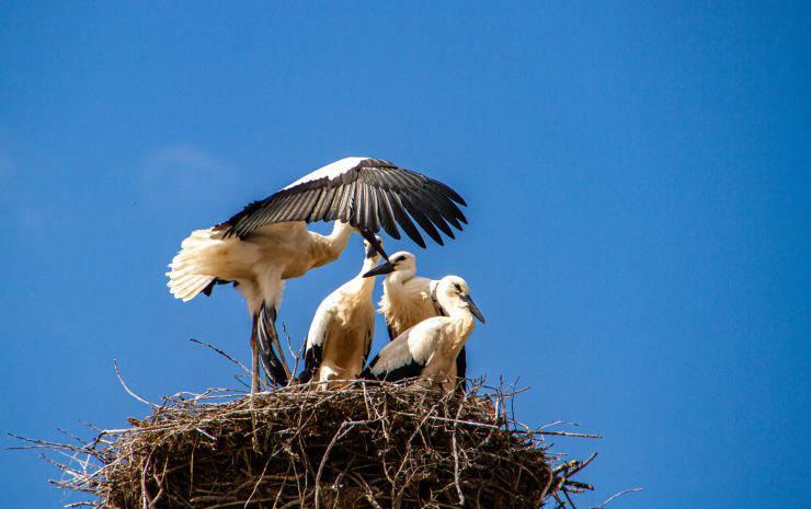 Volatili nel nido