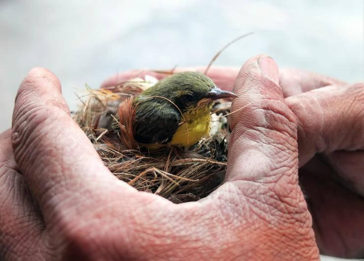 Uccellino tra le mani