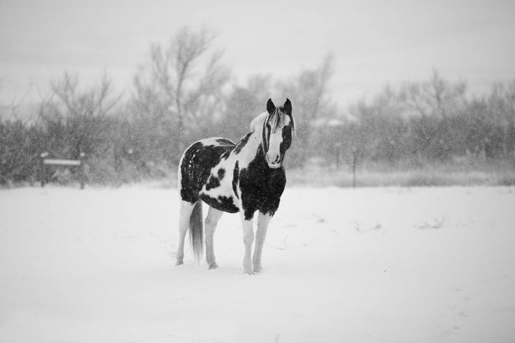 riscaldamento globale cavalli