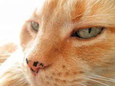 macchie nere naso gatto