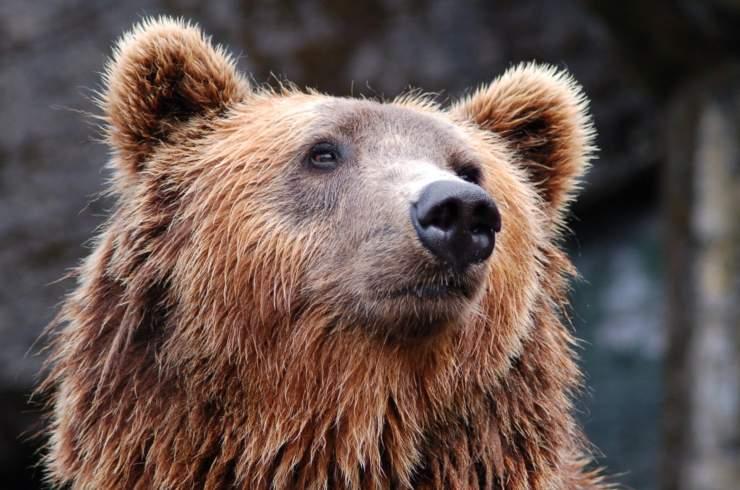 animali zoo bioparchi aiuto