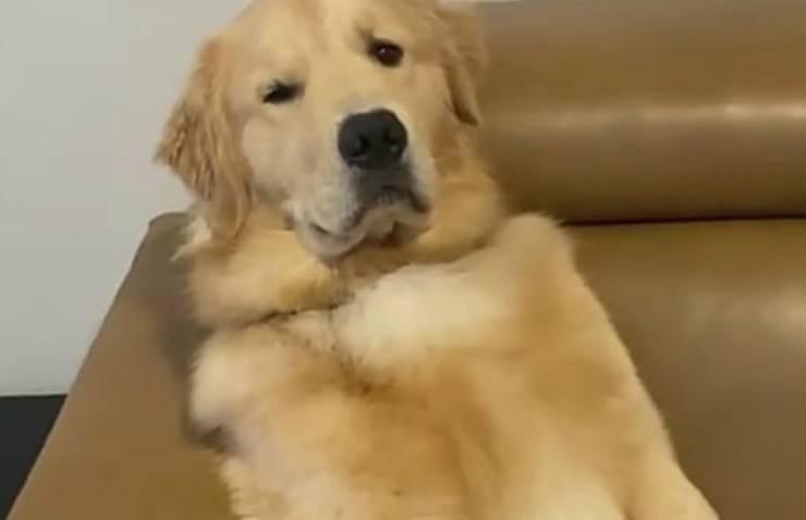Il cane comodo sul divano (Foto Instagram)