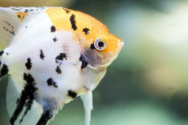 10 pesci più facili da allevare
