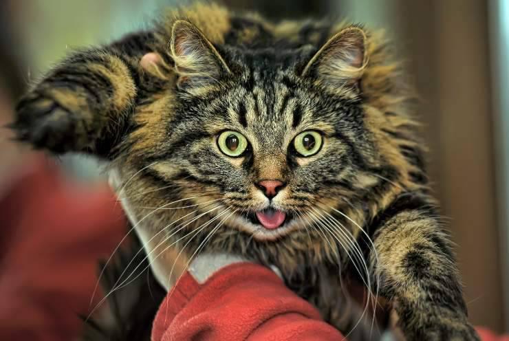 10 segni di stress nel gatto