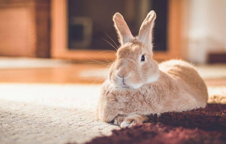 12 errori da non commettere con un coniglio
