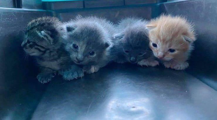 Gattini malformazione genetica