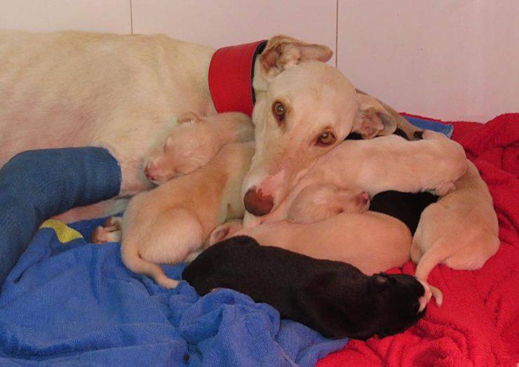 cagna porta veterinario cuccioli
