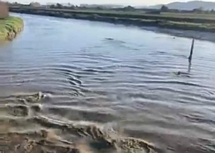 Delfini in movimento nell'acqua (Foto video Facebook Peter Pakinga)