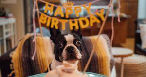 Come preparare una festa di compleanno per cani