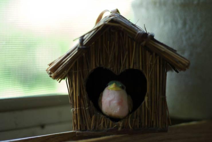 organizzare la gabbia per un uccello