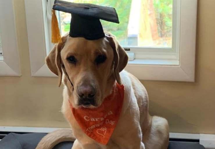 Il cane con il suo riconoscimento accademico (Foto Instagram)