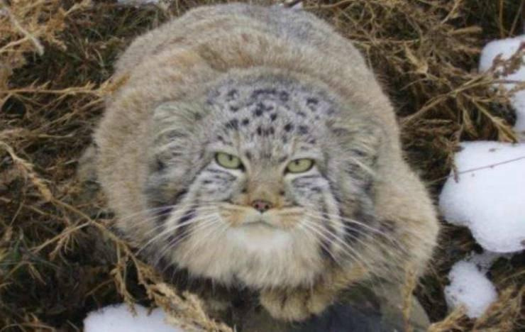 Il gatto sconosciuto (Foto Facebook)