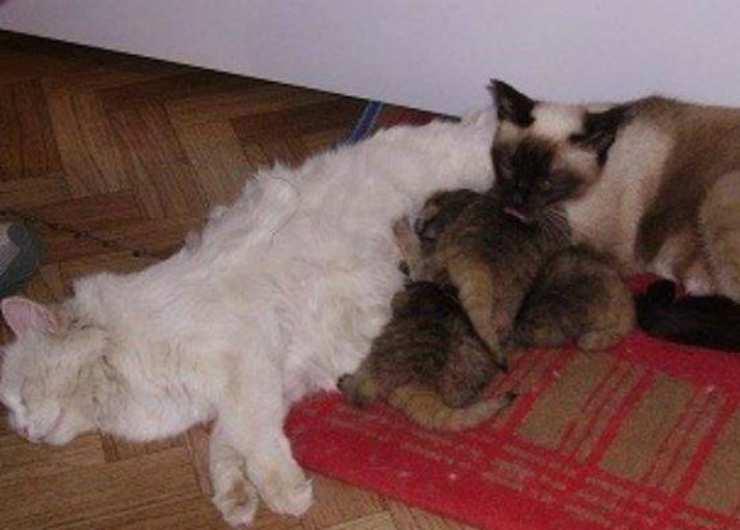 Le due gatte e i trovatelli (Foto Facebook)