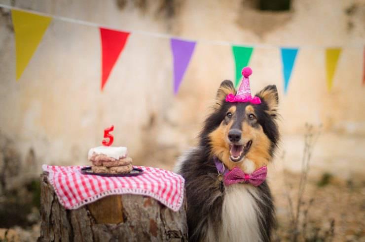 festa compleanno cane