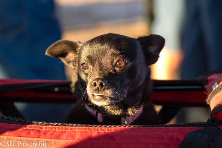 cane luce solare raggi