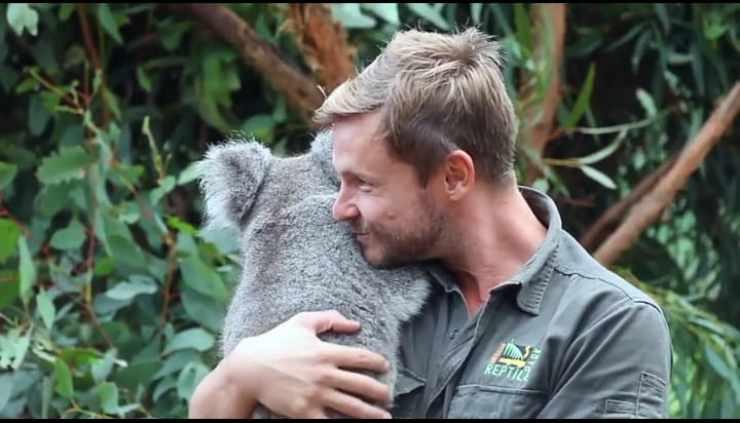 L'abbraccio del koala (Foto video)