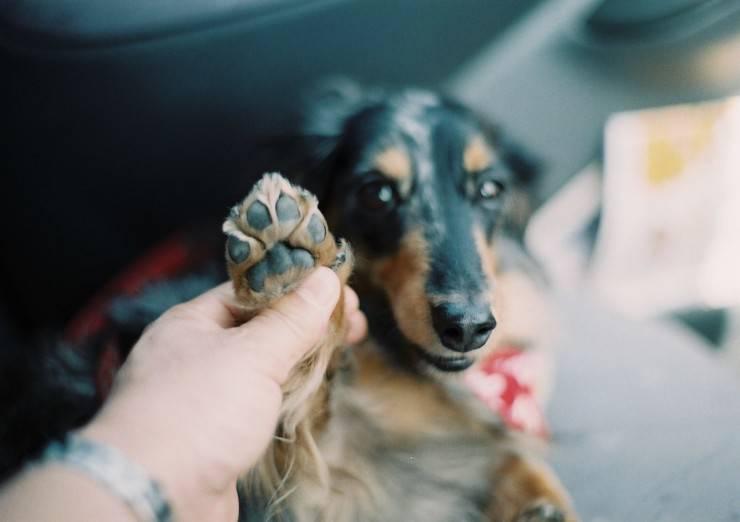 Perché il cane si morde le zampe? I motivi, i rischi e i benefici per Fido