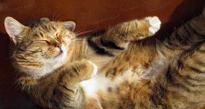 Perché ai gatti piace stare al sole?