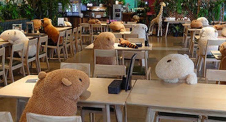 Invasione animali tavoli bar