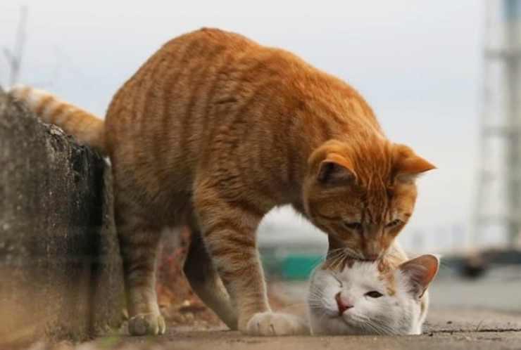 Il bacio del gatto (Foto Instagram)
