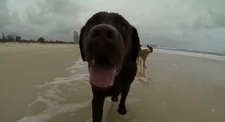 L'espressione di gioia del cane (Foto video)