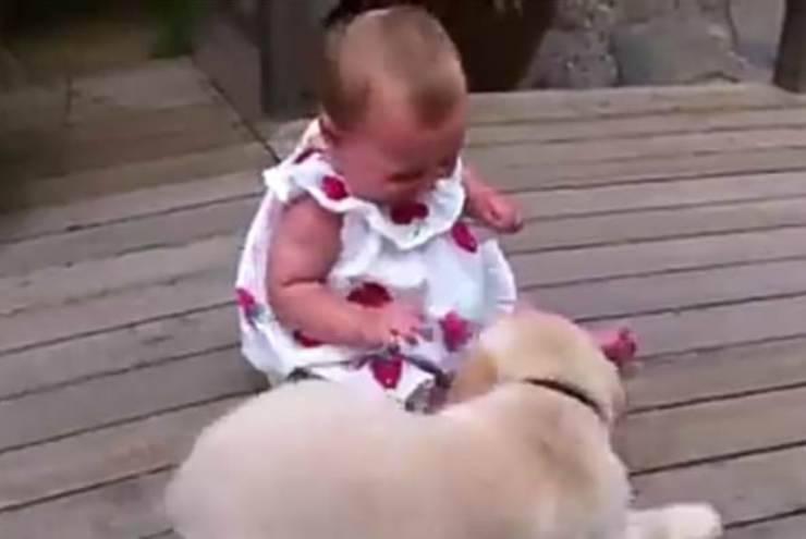 Il cane che fa le feste alla bambina (Foto video)