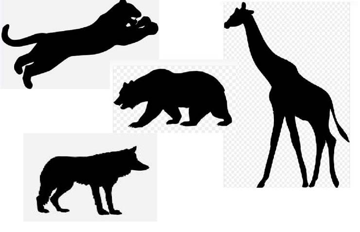 animale guida