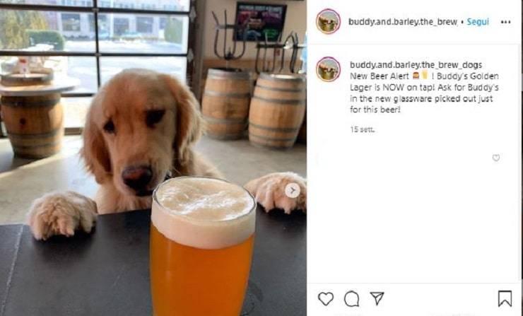 Uno dei due Golden Retriever nel birrificio