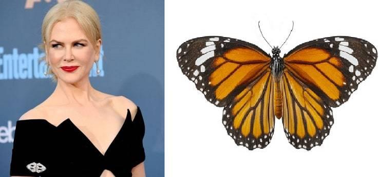 Kidman - Farfalle e falene