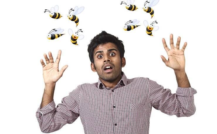 paura delle api
