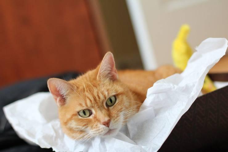 Il gatto può mangiare la banana?