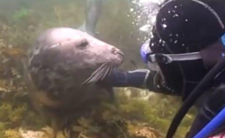 L'incontro con l'amico umano (Foto video)