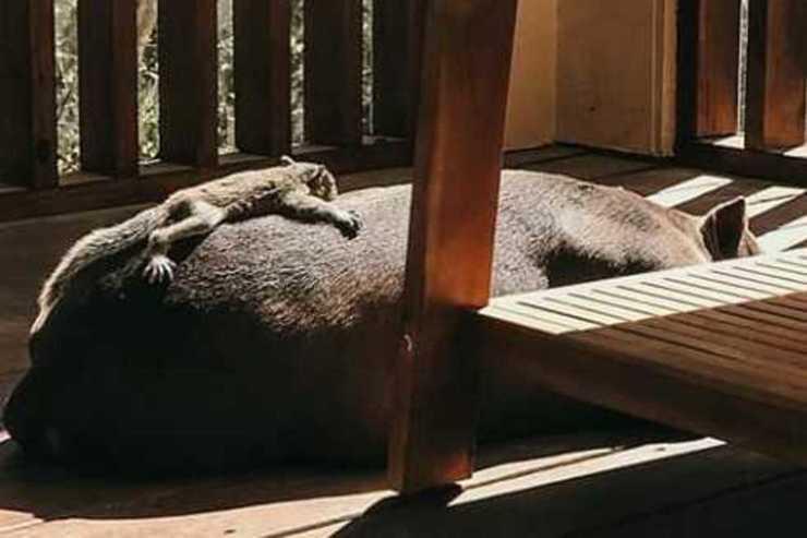 Scoiattolo e cane che dormono insieme (Foto Instagram)