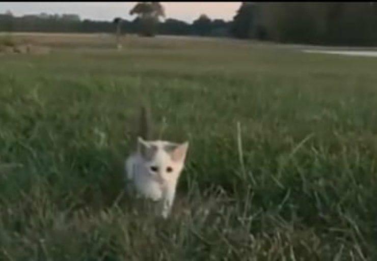 Il gattino nel prato (Foto video)