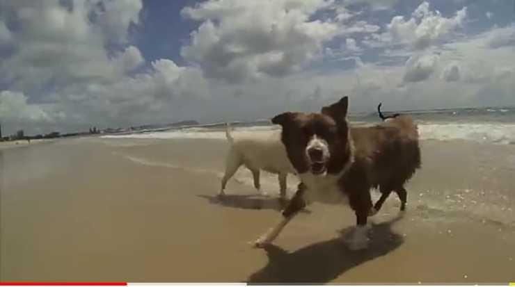 Il cane con la pallina (Foto video)