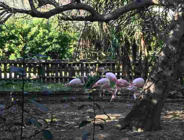Gli animali nel Parco (Foto Facebook)
