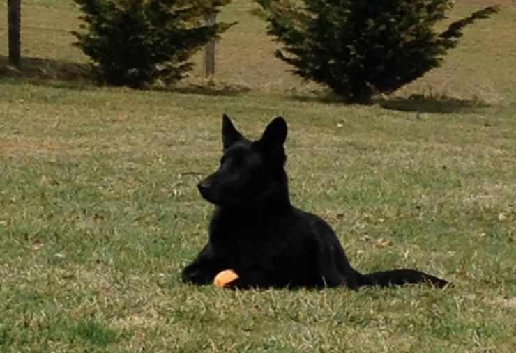 Il cane seduto sull'erba (Foto Facebook)