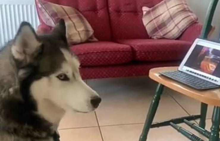 Il cane espressivo (Foto video)