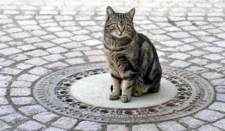 gatti siedono quadrato cerchio