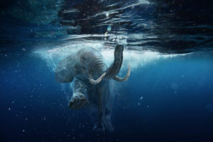 Pesce elefante