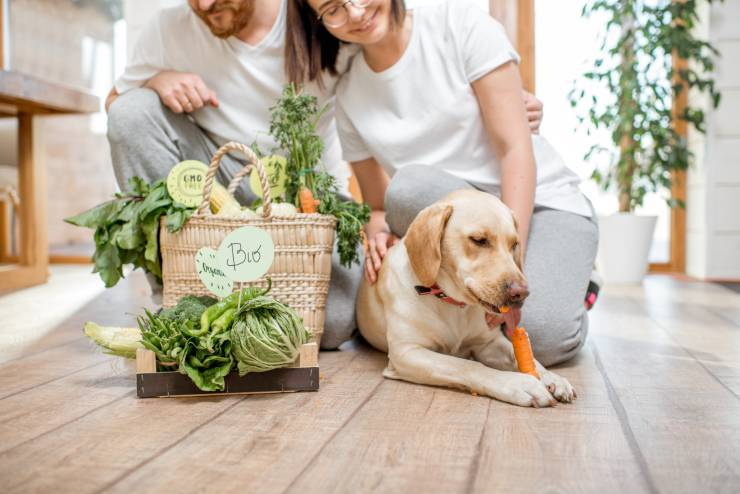 Dieta Eat Clean per cani