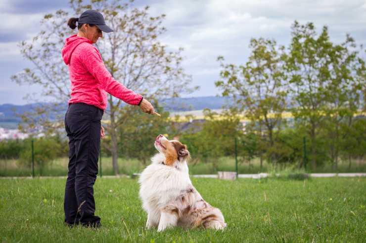 Diventare addestratore di cani