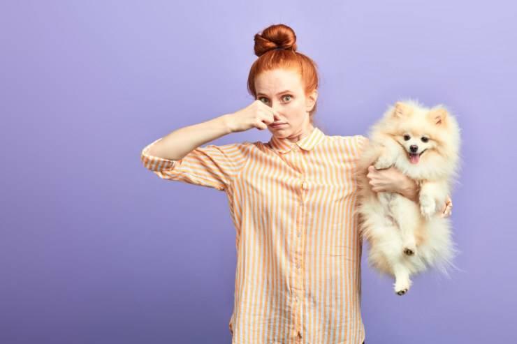 Razze di cani che non puzzano