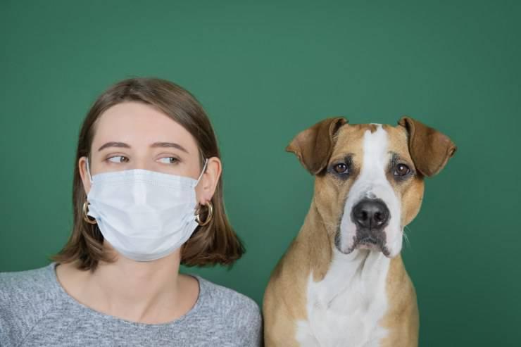 mascherina fare abituare cane