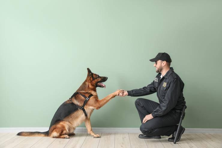 Amicizia e fedeltà (Foto Adobestock)