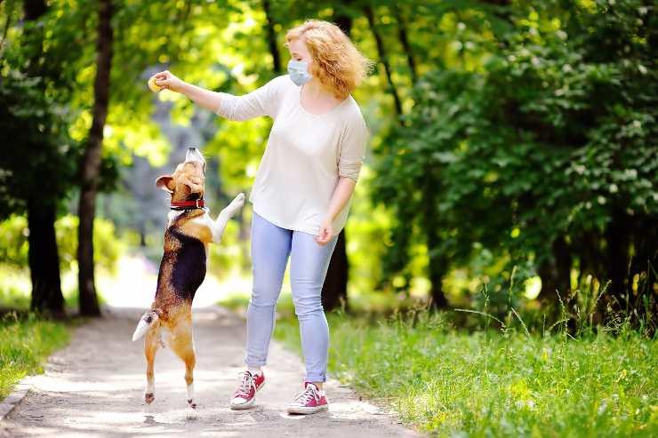 portare il cane al parco
